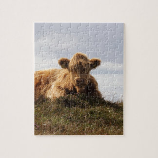 Luing cow on the Isle of Islay, Scotland Jigsaw Puzzle