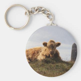 Luing cow on the Isle of Islay, Scotland Keychain
