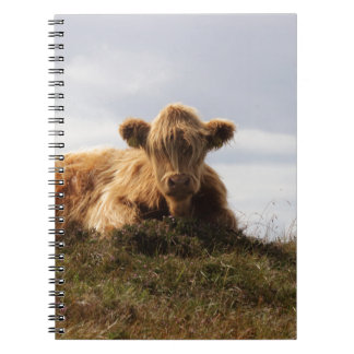 Luing cow on the Isle of Islay, Scotland Notebook