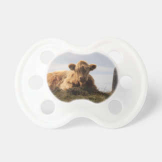 Luing cow on the Isle of Islay, Scotland Pacifier
