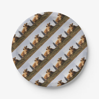 Luing cow on the Isle of Islay, Scotland Paper Plate