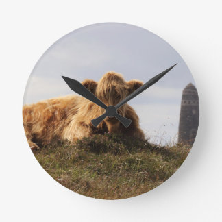Luing cow on the Isle of Islay, Scotland Round Clock