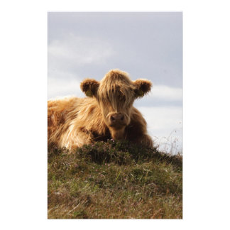 Luing cow on the Isle of Islay, Scotland Stationery