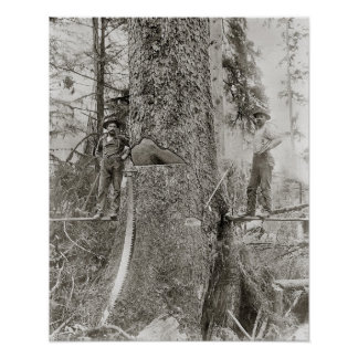 Lumberjacks with Giant Fir, 1905. Vintage Photo Poster
