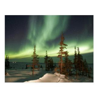 Lumières du nord Canada Cartes Postales