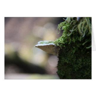 Lumpy bracket fungus greetings card