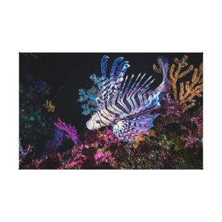 Luna lionfish, PteroislunulataTemminck&Schleg Canvas Print
