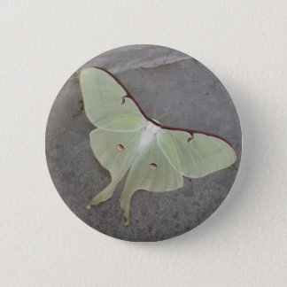 Luna moth button