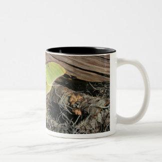 Luna Moth Lg Coffee Mug