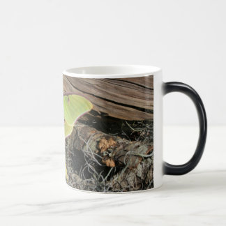 Luna Moth on a Morphing Mug