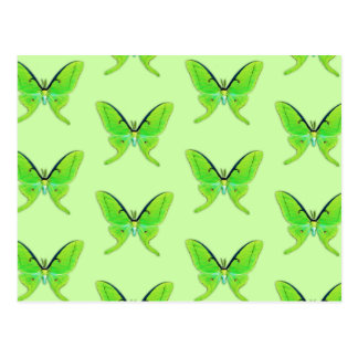 Luna moth on a pale green background postcards