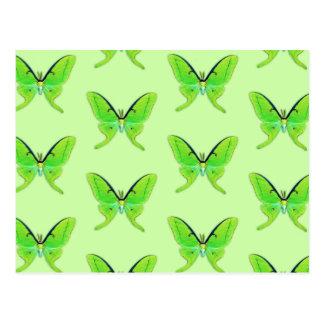 Luna moth on a pale green background postcard