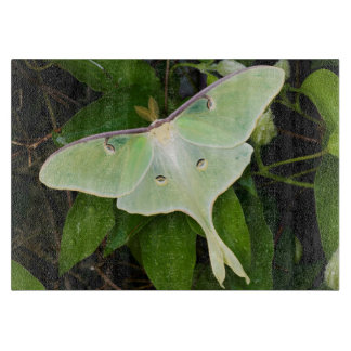 Luna Moth on Carnaby Clematis Cutting Boards