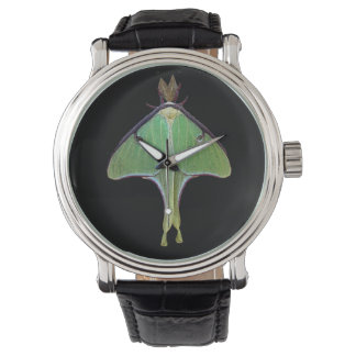 Luna Moth Watch