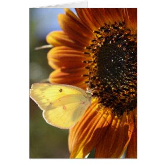 Lunar Moth Sun Landing Card