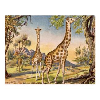 Lunch for a Giraffe Postcard