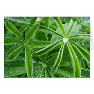 Lupin Leaves Beautiful Green Nature Card