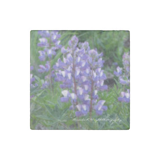 Lupine Magnet Stone Magnets
