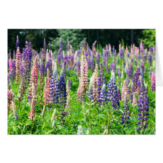 Lupine Meadow Greeting Card