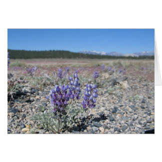 Lupine near Yosemite National Park Card