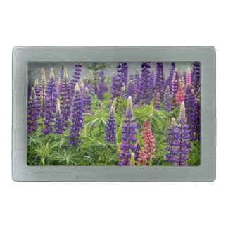Lupins in full bloom belt buckle