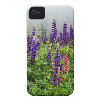 Lupins in full bloom iPhone 4 cases
