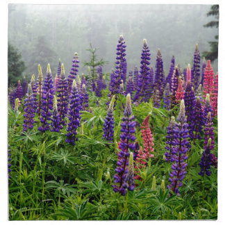 Lupins in full bloom napkin