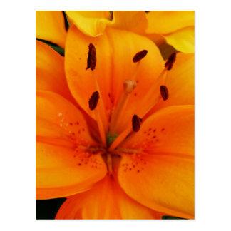 Luscious Apricot Floral Postcard
