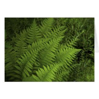 Lush Ferns Card