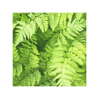 Lush Green Fern Fronds Canvas Print