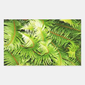 Lush green fern leaves sticker