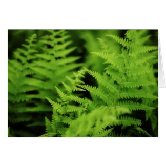 Lush Green Ferns Card