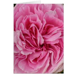 Lush Pink Rose Card
