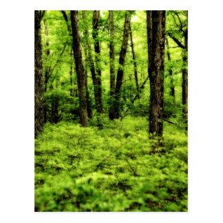 Lush Summer Woods Postcard