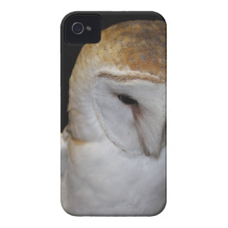 Luther- Common Barn Owl III Case-Mate iPhone 4 Cases