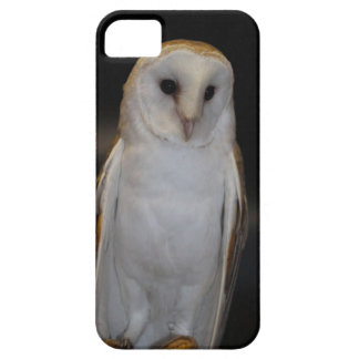 Luther- Common Barn Owl IV iPhone 5 Cover