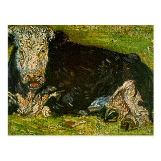 Lying Cow Postcard