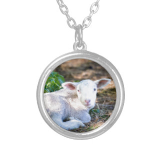 Lying lamb between nettle plants silver plated necklace