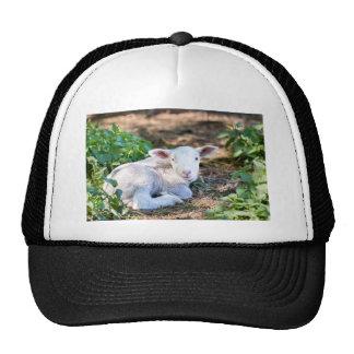Lying lamb between nettle plants trucker hat