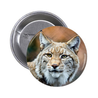 Lynx Bobcat Wildlife Predator Cat 2 Inch Round Button