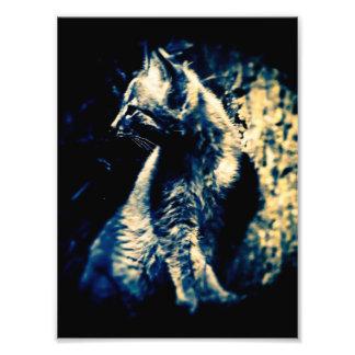 Lynx Cub Photo Print