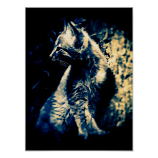 Lynx Cub Poster