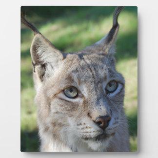 Lynx Lynx Bobcat - by Jean Louis Glineur Plaque