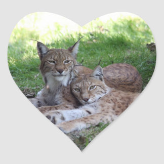 lynx pair in love heart sticker