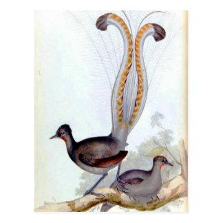 Lyre Bird Vintage Poster Postcard