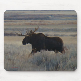 M0002 Bull Moose mouse pad