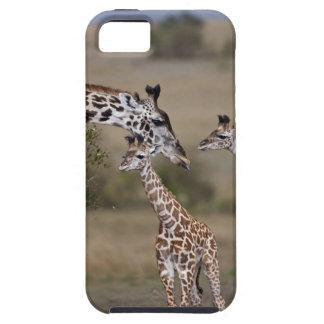 Maasai Giraffe (Giraffe Tippelskirchi) as seen iPhone 5 Cover