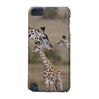 Maasai Giraffe (Giraffe Tippelskirchi) as seen iPod Touch (5th Generation) Cover