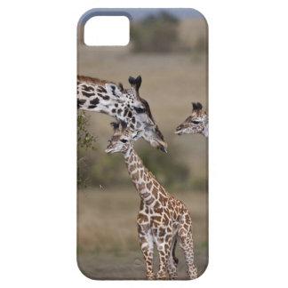 Maasai Giraffe (Giraffe Tippelskirchi) wie gesehen iPhone 5 Case