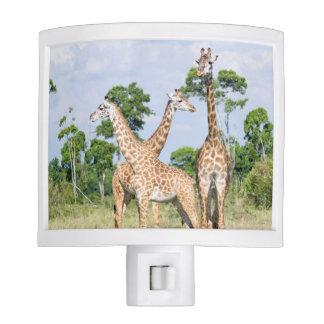 Maasai Giraffe Night Lite